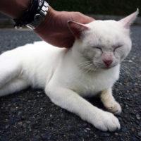 猫の島「相島(あいのしま)」(福岡県新宮町)に行ってきました。2時間ルート。猫かわいい
